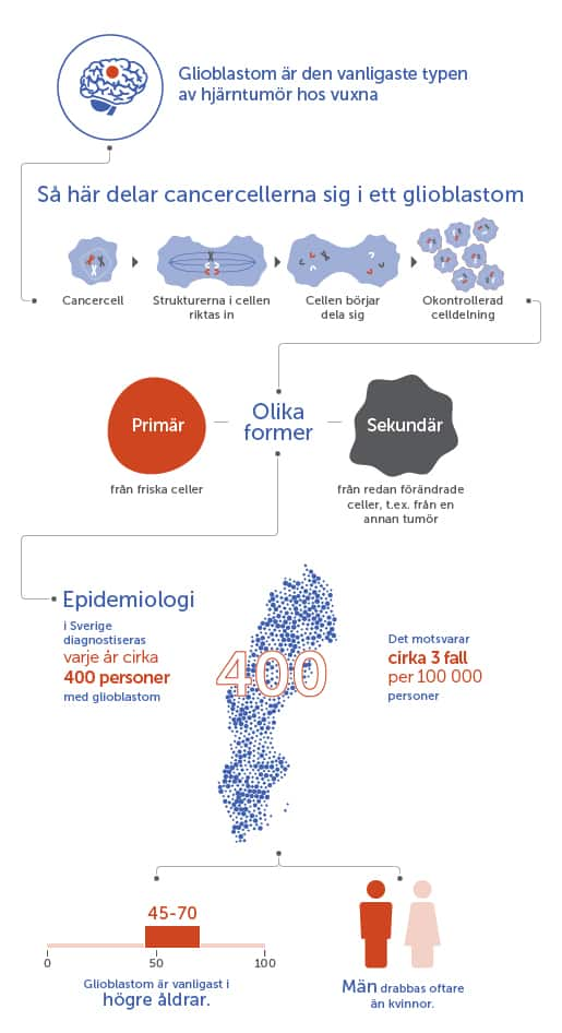 Vad är ett glioblastom grafik